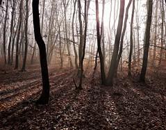 Autumn silhouettes (Ramona Muntean) Tags: romania