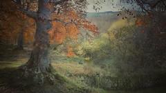 Otoño en el Moncayo (Marina Is) Tags: otoño fall tree arbol hojas leaves sliderssundays hss