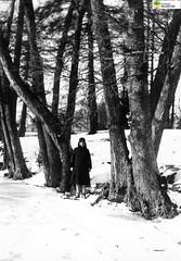 tm_6032 (Tidaholms Museum) Tags: svartvit positiv fotografier vinter snö snow tree winter kvinna