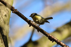 IMG_4695 (monika.carrie) Tags: monikacarrie wildlife scotland seatonpark