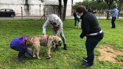 IMG_8595 (Doggy Puppins) Tags: educación canina adiestramiento canino perro dog