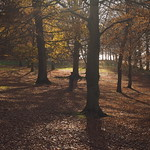 autumn light thumbnail