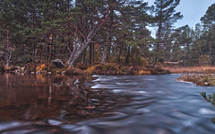 Turbulent Times Ahead (captures.in.time) Tags: river water calm turbulent landscape trees tree pine heather aviemore scotland highlands morlich lake loch landscapephotography visitscotland morning sunrise