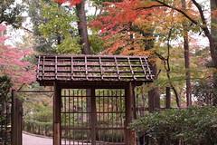 Welcome to Japanese Autumn Garden (seiji2012) Tags: 東京 紅葉 荻窪 門 autumn foliage gate wood tokyo ogikubo maple