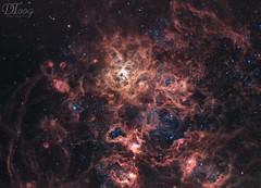 Tarantula Nebula - NGC 2070 (Delberson Tiago) Tags: astronomy astrophotography astrofoto astrofotografia astronomia astrophoto amateur apod cosmos ceuprofundo nasa nightsky nebulae night nebulosa nebula nature universe universo deepsky dso optolong oriontelescopes orion qhy qhy163m baader astrometrydotnet:id=nova3089643 astrometrydotnet:status=solved
