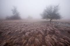 Fog (Kristóf Diós) Tags: landscape fog foggy weather grassland grasslands winter táj tájkép köd időjárás