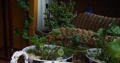 خطوات خياطة سلة من بواقي القماش Tutorial: Gathered Round Basket (ezo-handmade) Tags: اشغال يدوية الطرز و الخياطة خياطة سلة لوازم