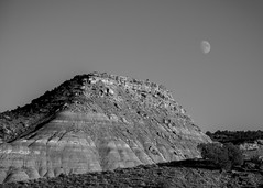 Loyal Companion on the Rise (trainmann1) Tags: nikon d7200 amateur colorado co fall october 2018 vacation trip scenic west blackwhite blackandwhite bw desaturated mountain hill rock rocks layers moon formation coloradonationalmonument nationalparkservice parkservice park