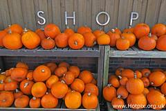 365-103 Halloweens Coming (HotpixUK-2019) Tags: pumpkin pumpkins rslsicialhousing