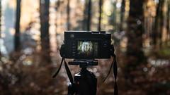 (2D110) Tags: automne nature arbre nikond750 leicamp240 appareilphoto photo
