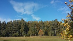 Autumn Colours, Balbithan Woods, Kintore, Aberdeenshire, Sep 2018 (allanmaciver) Tags: balbithan woods aberdeenshire scotland north east trees shelter clouds weather autumn colours shades close country image allanmaciver