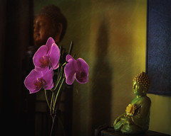 Quiet Space (joegeraci364) Tags: buddha peace serene spiritual statue zen silhouette stilllife altered abstract art design cigar box table interior house home living space indoor comfort flower orchid pink color
