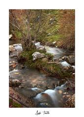 _ATP4598 (anahí tomillo) Tags: nikond7500 sigma1750f28 lightroom bosque forest naturaleza nature paisaje landscape agua water rio river rocas rock otoño autunm longeexposure largaexposición
