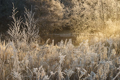 Beautiful frost (Helena Normark) Tags: frost beautifulfrost winter heimdal trondheim sørtrøndelag norway norge sonyalpha7ii a7ii 50mm lensbaby edge50 lensbabyedge50 lensbabylove seeinanewway