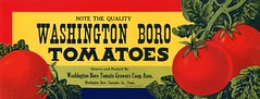 Washington Boro Tomatoes Label, Washington Boro, Pennsylvania (Alan Mays) Tags: ephemera labels crateboxlabels cratelabels producecratelabels vegetableboxlabels boxlabels advertising advertisements ads paper printed washingtonborotomatoes washingtonborotomato tomatoes vegetables vegetable produce washingtonborotomatogrowerscooperative tomatogrowers growers cooperatives associations agriculture farmers farming illustrations borders red yellow green washingtonboro pa lancastercounty pennsylvania antique old vintage typefaces type typography fonts usplco usprintinglithco unitedstatesprintingandlithographco unitedstatesprintinglithographcompany unitedstatesprintingandlithographcompany printers lithographers baltimore md maryland