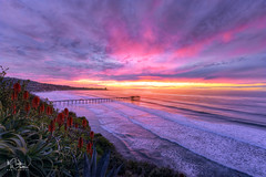 Sunset and Blossoms (markwhitt) Tags: markwhitt markwhittphotography sandiego california pacificocean southerncalifornia ocean sea water waves pier scrippspier lajolla sunset mood clouds colors colorful aloevera blossoms plants cliff martinjohnsonhouse coast outdoors landscape nature scenic scenery wonderful view beautiful dramatic nikon photography travel adventure