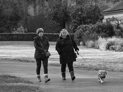 Walking the dog (sasastro) Tags: panasonicg3 manualfocus mirrorless streetphotography candid peoplewatching burystedmunds