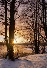 Winter Starburst (Vest der ute) Tags: xt2 norway rogaland haugesund djupadalen snow winter sunrise trees tree grass clouds ice water lake fav25 fav200