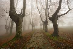 Path to the Unknown (Hector Prada) Tags: autumn otoño path camino forest bosque fog niebla tree árbol leaves hojas mist bruma mood enchanted creepy dreamy paísvasco basquecountry urkiola