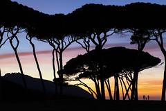 The Sense Sunset (The Sense Experience Resort) Tags: tramonto alberi pini spiaggia cielo sagoma sole alba mare paesaggio natura oceano estate crepuscolo isola nuvole sera azzurro paradise viaggiare persone pino toscana italia italy