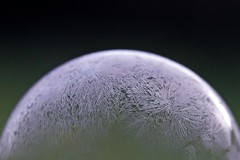 365 - Image 034 - Frozen bubble... (Gary Neville) Tags: 365 365images 6th365 photoaday 2019 sony sonyrx10iv rx10iv rx10m4 iv m4 sonyrx10m4 garyneville polaroid250d