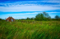 The Sheep Pen (C.G.Photos) Tags: norfolkbroads sheep marsh eastanglia england wetland landscape