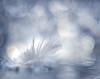 Angel's feather (Tomo M) Tags: bokeh cropped closeup macro feather holidaybokeh macromondays christmas winter white light helios