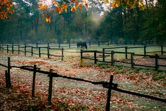 There in a Dream (Tom Levold (www.levold.de/photosphere)) Tags: afsnikkor70300mmed autumn fujixt2 herbst xf18135mm morgen nebel königsforst cologne morning fog landscape landschaft horse pferd