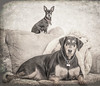 Jackson and Chrissy (LanaScape Photos) Tags: second dogs doberman chihuahua texture overlay