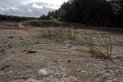 Paunküla veehoidla (Jaan Keinaste) Tags: pentax k3 pentaxk3 eesti estonia loodus nature harjumaa paunkülaveehoidla veehoidla reservoir