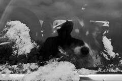 ME & THE DOG (B/W) (LitterART) Tags: