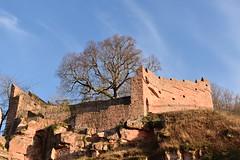 Upper Bastion, Wertheim Castle (sharon.corbet) Tags: wertheim badenwürttemberg germany 2019 wertheimcastle bastion tree