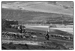 82207_14 High Atlas, Morocco, 1982 (Wolfgang_Kraus) Tags: morocco maroc marokko atlas mountains analog hautatlas imazighen berber tree landscape film ilford hp5 id11 pentax mx monochrome schneiderkreuznach adapted 11 xenon zirconia k1 dslrscanning linescan industriallens piplkan