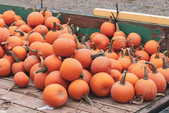 Pumpkins (clpo13) Tags: fall trailer orange pumpkins washington unitedstates mountvernon d80