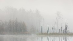 Herbstmorgen am See (IIIfbIII) Tags: autumn herbst landschaft landschaftsfotografie landscapephotography müritznationalpark müritz canonphotography naturephotography natur nature naturfotografie wildlife light nebel fog fotografie foggy trees wood wald mv mecklenburgvorpommern mecklenburg