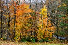 Westbrook Park_4594 (smack53) Tags: smack53 foliage fall fallseason fallcolors autumn autumnseason autumncolors colorful westmilford newjersey nikon d100 nikond100