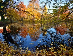 Is this the real life....? (Tobi_2008) Tags: herbst autumn teich pond spiegelung reflection bäume trees sachsen saxony deutschland germany allemagne germania