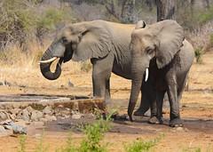 _DSC9022 (acomb) Tags: tanzania roadtrip ruaha tandala