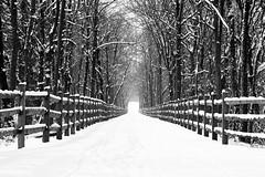 Snowy Path (tomcanon68) Tags: canon40d canon winter frozen snow cold bw blackandwhite canon70300 canon70300mmf456isii path monochrome