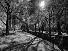 Shine (ancientlives) Tags: chicago illinois il usa travel sunshine cold weather bluesky trees nature walking streetphotography michiganavenue downtown loop city cityscape skyline sky shadows chicagoparks grantpark buildings architecture skyscrapers sunday november 11th 2018 anniversary blackandwhite bw monochrome mono