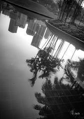 en passant par KL (Jack_from_Paris) Tags: p1000244bw panasonic dmcgx8 micro 43 pancake14mmf25asph pancake raw mode dng lightroom rangefinder télémétrique capture nx2 lr monochrom noiretblanc bw wide angle kl kuala lampur street building skyscraper tours klcc reflet bassin eau water palmiers palm trees shadows ombres