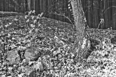 Heavy Snow (brucetopher) Tags: snowstorm storm snow cold frigid landscape coldwinterlandscape winterlandscape winterscene snowscape wind windy ice leaf fall autumn snowfall snowing black white blackandwhite bw blackwhite monochrome mono bnw