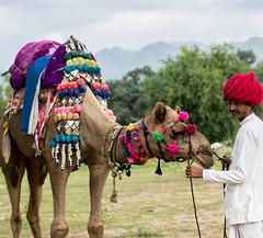 Mana Kumbhalgarh - Camel Ride (manakumbhalgarh) Tags: hotel resort travel tourism tourist vacation holdiay
