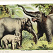 Asiatic elephant from Johnson's Household Book of Nature (1880) by John Karst (1836-1922).