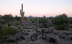 Sonoran Desert (Shu-Sin) Tags: sonora sonoran desert cactus arizona bushes sunset twilight dusk bicycle bike velo bici folding small wheel randonneur randonneuse travel tour touring