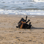 Black dog happily rolls in the sand in front of the sea thumbnail