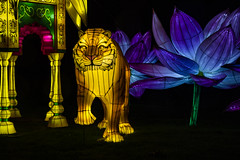 longleat big cat (Mark Rigler -) Tags: longleat festival light display england south night shot time dark black fantastic voyage thrilling expedition space marvel wondrous scenes exotic glacial astonishing creatures magnificent scenery stunning structures transportation epic adventure