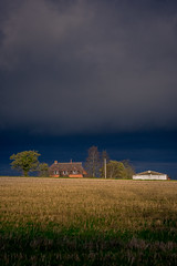Gold and blue (Niaic) Tags: sunset bluehour blue storm cloud clouds cloudy ominous golden field farm buildings outdoors outdoor tree trees contrast stormclouds farming countryside rural low fallow winter sparse barren powerlines voigtlander apolanthar 110mm