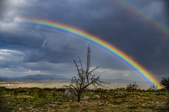The Tree And The Rainbow (panos_adgr) Tags: nikon d850 nature landscape photography rain clouds colourful rainbow contrast winter field tree grass earth viotia plataies greece travel