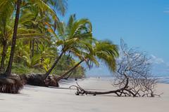 Comandatuba - Bahia (Marcelino Dias) Tags: island ilha comandatuba una bahia praia deserta coqueiros coconuts